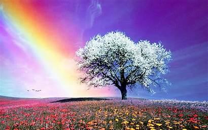 Wallpapers Tree Desktop Backgrounds Rainbow Hebrews Pc