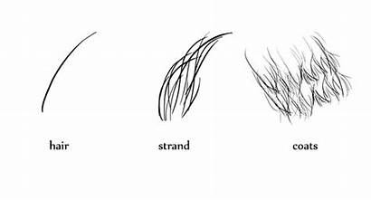 Fur Draw Animals Animal Sketch Drawing Coat