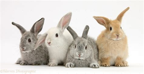 Rabbit Breeders Show @ Stephens County Fair & Expo Center | Duncan | Oklahoma | United States