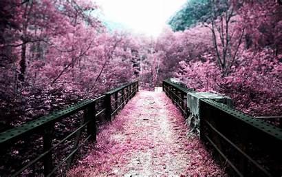 Cherry Blossom Nature Spring Autumn Flower Px