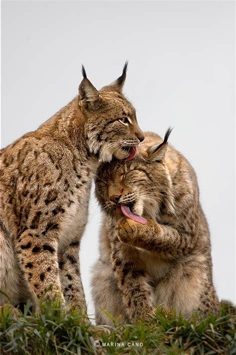 Splendid Wild Animals Photos By Marina Cano