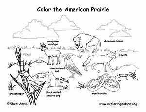 animal habitat coloring pages - Google Search | 1st Grade ...