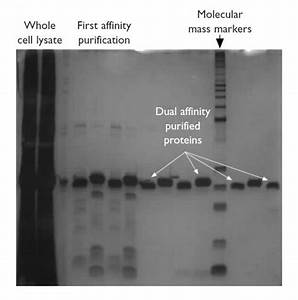 Protein Arrays For Assessment Of Target Selectivity