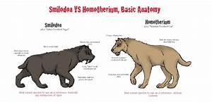 Comparison: Smilodon vs Homotherium by CorinthianKrim on ...
