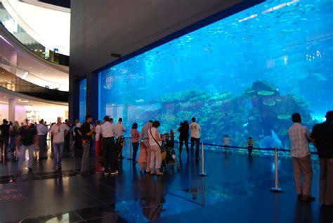 the dubai mall aquarium dubai mall uae world for travel