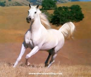 White Horse ♡ - Horses Photo (35203626) - Fanpop