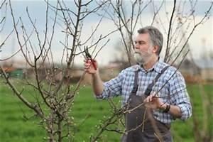 Apfelbaum Schneiden Anleitung : apfelbaum schneiden so wird 39 s gemacht ~ Lizthompson.info Haus und Dekorationen
