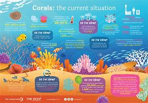 Information Poster About Coral