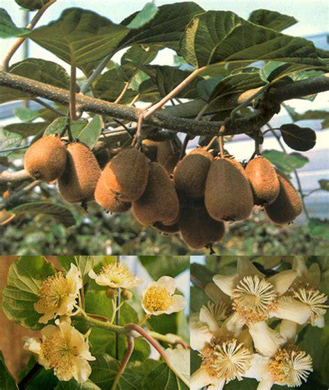 fiori in italia piante e frutti tropicali in italia