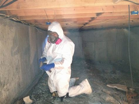 mold removal services ecos