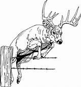 Elk Bugling Coloring Template sketch template