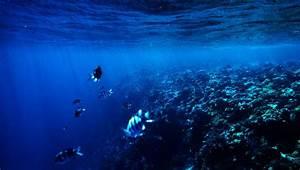 Online Course  Marine Biology 101
