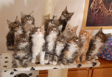 beantworte die fragen deiner katze tag sprueche suche
