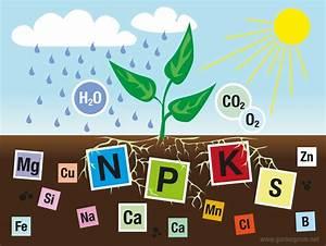 Pflanzen Die Kein Licht Brauchen : n hrstoffe f r pflanzen was brauchen pflanzen zum leben ~ Lizthompson.info Haus und Dekorationen