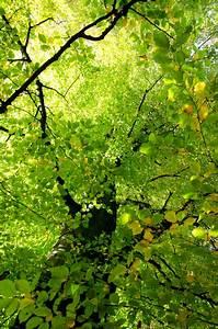 Pflanzen Die Nicht Viel Licht Brauchen : photosynthese aus licht wird leben ~ Markanthonyermac.com Haus und Dekorationen
