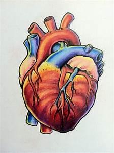 Attractive Anatomical Heart Tattoo Design | Tattooshunt.com