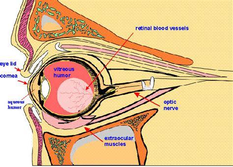 eye biologyisc