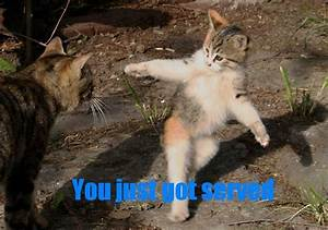 Funny Pictures: Funny cat picture, funny cats pictures ...