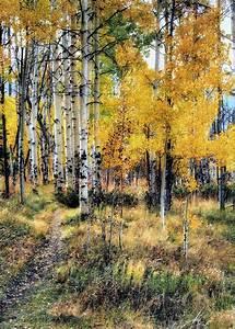 Autumn, Aspen, Home, Decor, Hiking, Rocky, Mountains, Colorado, Awakeninglight, U00a9, Jim, Hill