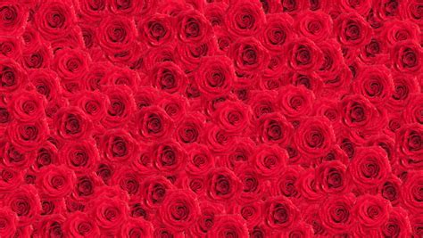 Animated Roses Wallpaper - beautiful roses wallpaper animated background stock