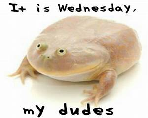 """""""It is Wednesday my dudes"""" Stickers by YoBoiRedgie Redbubble"""