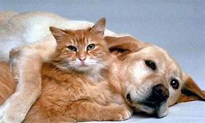 Love Between Dogs and Cats | Weird Hut