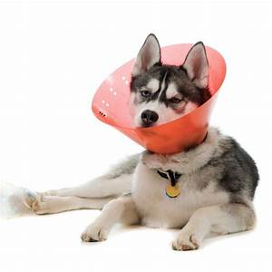 Video Pour Chien : viande de cheval pour chiens nourriture pour chien alimentation pour chien de toutes races ~ Medecine-chirurgie-esthetiques.com Avis de Voitures
