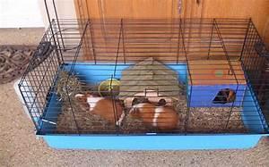 Cage A Cochon D Inde : comment choisir la meilleure cage cochon d 39 inde tests ~ Dallasstarsshop.com Idées de Décoration