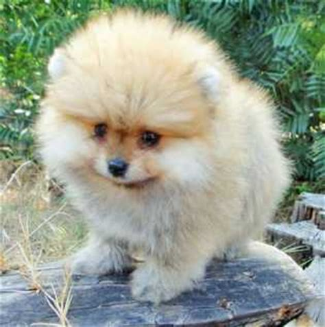 search ads  auctions dogs puppies  sale switzerland