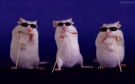 three blind mice quot three blind mice quot rhyme is published the declaration