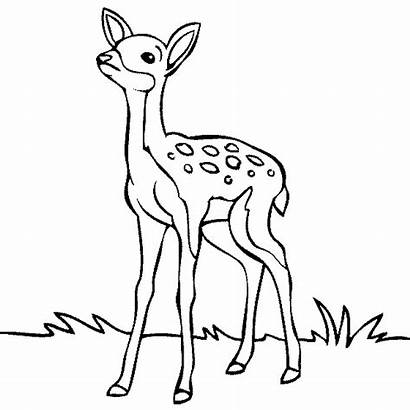 Deer Coloring Pages Enjoyable Leisure Totally Activity