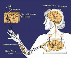 Opinions on Somatosensory system