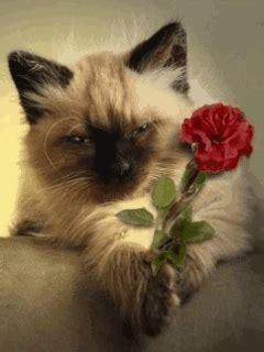 animated cute cat mobile wallpaper mobile toones