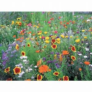 Que Planter En Juin : quoi planter en juin guide complet ~ Melissatoandfro.com Idées de Décoration