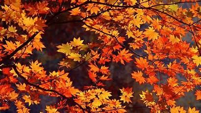 Autumn Wallpapers Japan