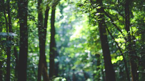 wallpaper forest   wallpaper  trees sunlight