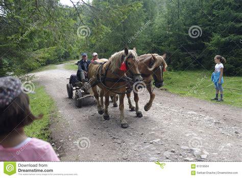 carrozza a cavalli carrozza a cavalli montagne di apuseni romania immagine