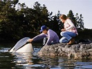 Free Willy 2: The Adventure Home (1995) - Dwight H. Little ...
