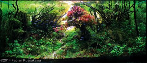 Japanese Aquascape by Best Aquascapes Of 2014 Aquarium Info
