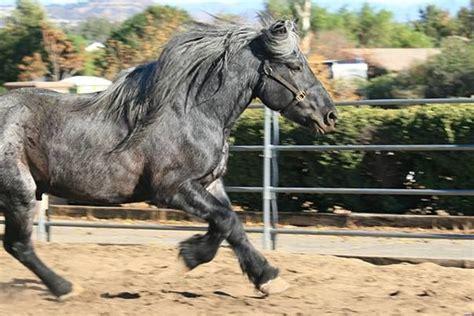 roan stud horse rare eponaexchange extremely registered