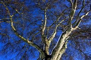 Bäume Schneiden Wann : b ume kunstvoll schneiden formgeh lze brauchen wenig ~ Lizthompson.info Haus und Dekorationen