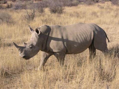 Beautiful Dangerous Wild Animals Pets Of Africa