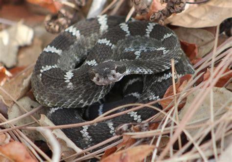 wildlife  mount diablo state park sfbaywildlifeinfo