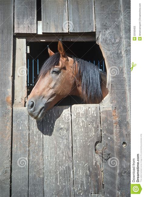 horse    barn window stock  image