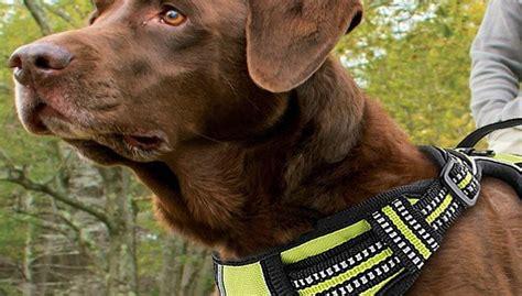 modelle  klarer testsieger hundegeschirre test