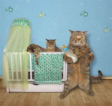 Keep Cats Out Of Crib by How To Keep The Cat Out Of Your Baby S Crib