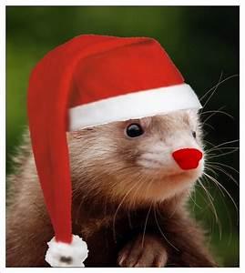 Un Noel Memorable : le no l de la conf la confr rie des traducteurs ~ Melissatoandfro.com Idées de Décoration