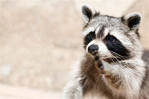 Smartest Animals: 12 Species That Are Truly Genius ...