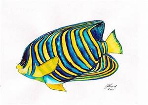 Fish painting watercolour study of a Regal Angelfish ...