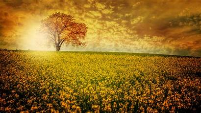 8k Ultra Nature Resolution Flower Field Wallpapers